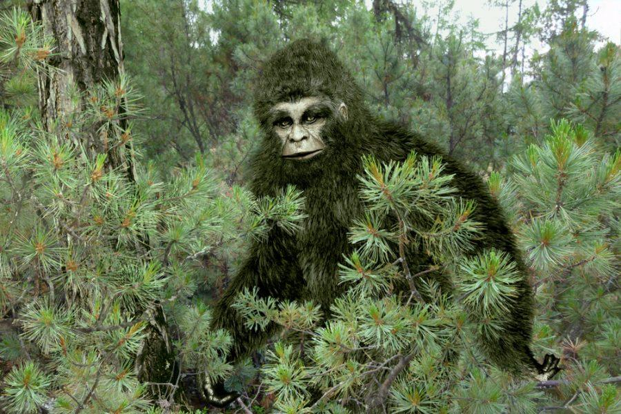 Child discovers juvenile Bigfoot on Australian farm